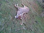 wifes buck 08 DE shotgun