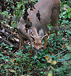 09 hunting photos