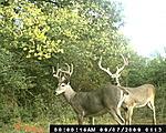 TN Deer