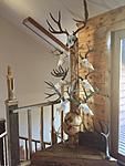 My Antler Tree I made from a tree with a large burl on it.