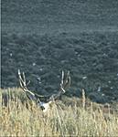 Hunting Pix