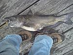 It seems to be a year for my biggest everythings,biggest Turkey and now my biggest Channel Cat caught 5/12/12.I hope this is my year for my biggest...