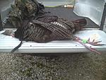 downsized 0511131502a Kents 2013 Spring Turkey, 22lbs. 11' Beard and 1 1/2 Spurs taken 5/11/13