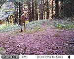 2016 Deer Pics