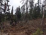 Bear Hunting Clips