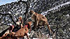 utah/arizona mountian lion hunts-img_0394_moment.jpg