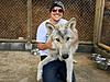 Wolf Dog Pups. Approved Homes Only. High Percentage.-rio-jan.-16-1.jpg