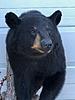 Got My 2016 NJ Archery Bear Back-img_0396.jpg