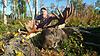 Moose hunt guided for big whitetail or mule deer-moose.jpg