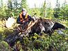 Moose hunt guided for big whitetail or mule deer-moose-33.jpg