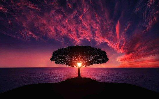 Name:  tree-736885__340.jpg Views: 9 Size:  32.1 KB