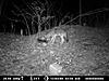 2012 Trail Camera Photos-coyote-3.jpg