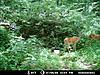 2012 Trail Camera Photos-38004_141571305863439_3600999_n.jpg-deer-pic-5.jpg