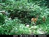 Kentucky trail camera pictures-38004_141571302530106_6581884_n.jpg-deer-pic-4.jpg