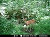Kentucky trail camera pictures-37856_141571149196788_2382765_n.jpg-deer-pic-1.jpg