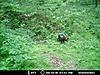 Kentucky trail camera pictures-34273_134995756520994_8265454_n.jpg-turkey-2.jpg