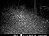 Kentucky trail camera pictures-fox-2.jpg