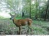 Best Trail Cam for under 100 Bucks-350c-3.jpg