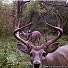 Trail cam pics-43efb8b4-669f-405f-b352-b0f45761c758.jpeg