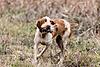 A few pictures from a quail hunt this week-dbe4b345-de30-4a0b-8682-4c18fb44bf1b.jpeg