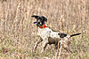 A few pictures from a quail hunt this week-image.jpeg
