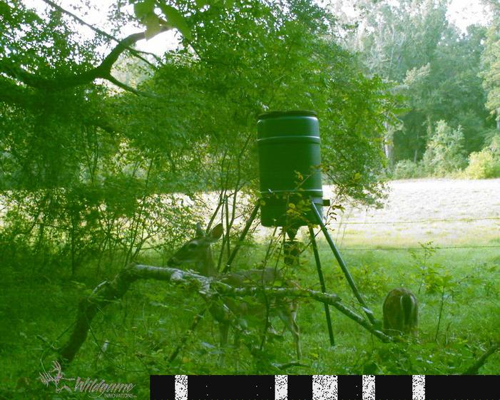 Name:  game cam 031.jpg Views: 30 Size:  100.0 KB