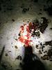 Blood Trail Problems-img_1813.jpg