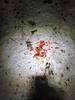 Blood Trail Problems-img_1812.jpg