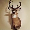 Wyoming 2012 Hunt-977778_10200198652991585_968396729_o.jpg