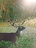 Managing bucks, THIS is what I like to see!-2014big8.jpg