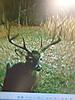 Managing bucks, THIS is what I like to see!-2014big82.jpg