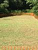 How much lime on 1/16 acre with 5.1 pH?-plot111.jpg