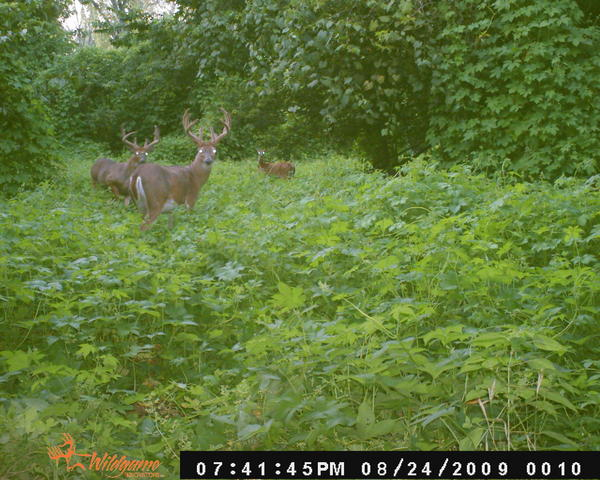 looking to kill this this year
