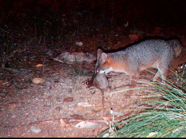 post your best trail camera pics here - Page 8 - HuntingNet.com Forums