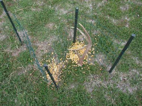 Huntingnet Com Forums View Single Post Shed Traps