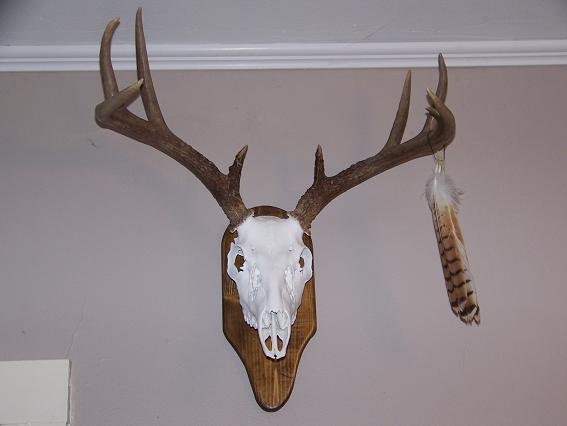 IAMSport: Deer antler plaque patterns