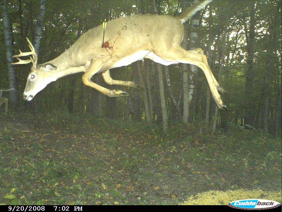 Awesome trail cam pic huntingnet com forums