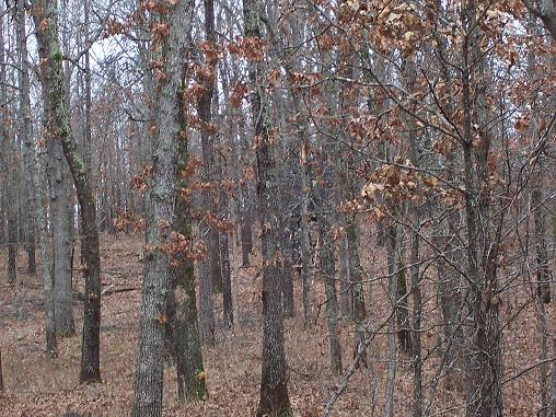 Plans for a permanent stand forums for Permanent tree stand