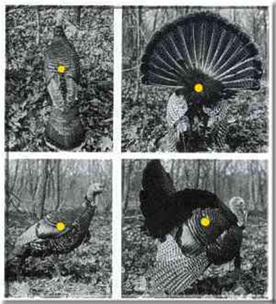 bow hunting turkey for - photo #18