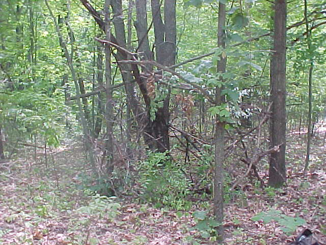 homemade ground blinds forums