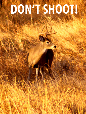 Shot Selection And Placement On Whitetail And Mule Deer