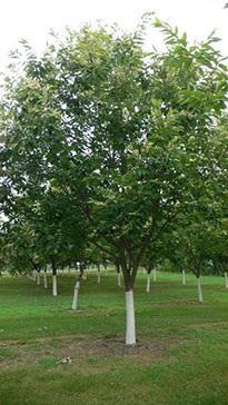 Real Tree Nursery Jpg