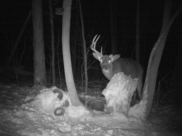 Trail Camera And Shed Hunting