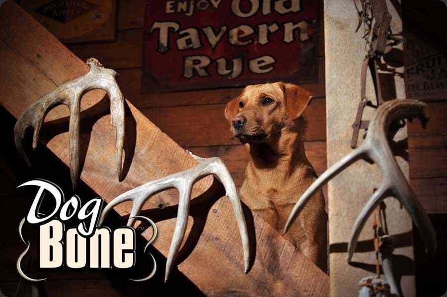 Dog Bone2.jpg