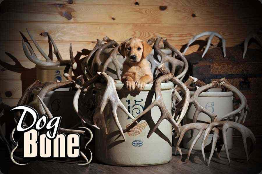 Dog Bone3.jpg